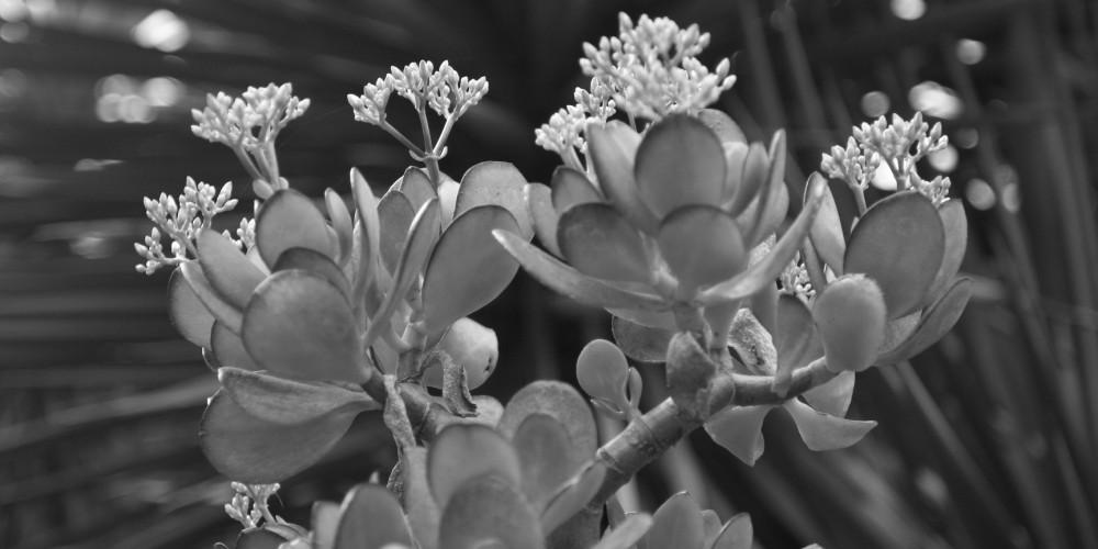פרח (צילום: חגי ידידיה)