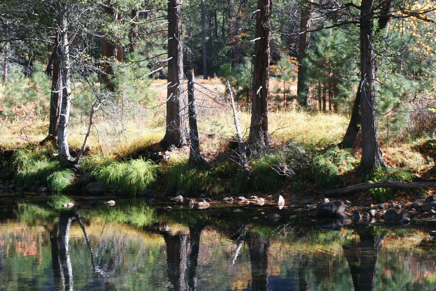 עצים בילוסטון (צילום: חגי ידידיה)